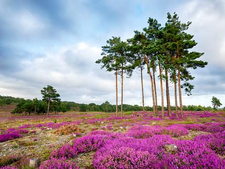 A National Park for a Thriving Dorset Economy