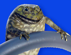 Toyota Frog