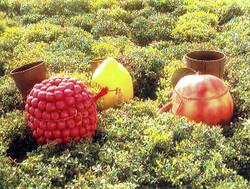 Snapple Fruit Kids