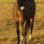 Horse Toby