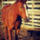 Horse Hippy