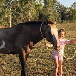 Horse Esky
