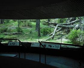 Congo Gorilla Forest Exhibit