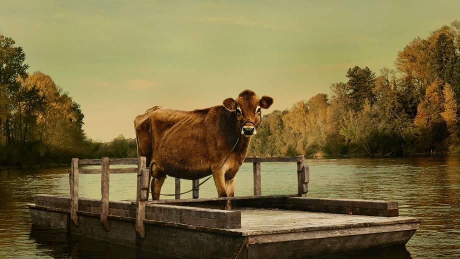 De eerste koe in 'First cow'.