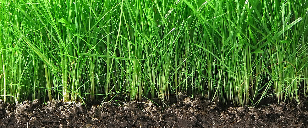 grass-with-roots.jpg