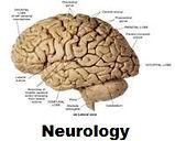 Neurology.1.jpg