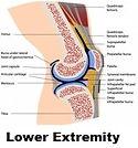 Lower extremity.1.jpg