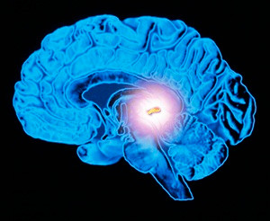 Sleep and Sand: Mysteries of the Tiny Pineal Gland