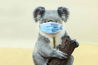 koaladelivery.jpg