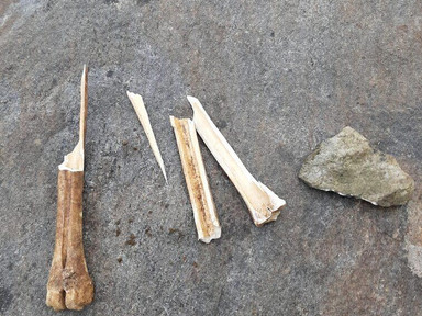 An adventure in carving a bone needle with stone tools