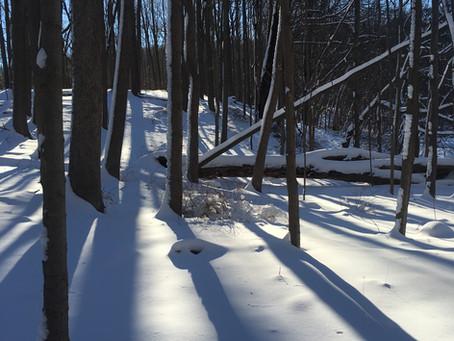 Snow Day Community