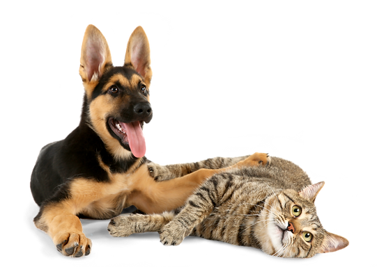 hero-pet-care-services-592x420.png