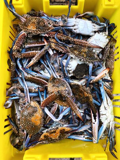 crabs in akko.jpg