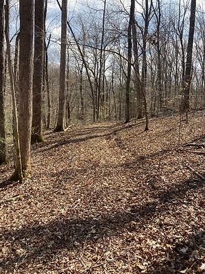 trail between lot 11&12.jpg