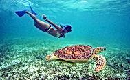 Acumal turtless
