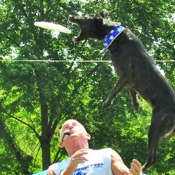 **** PAWS IN THE PARK****  FALL FESTIVAL