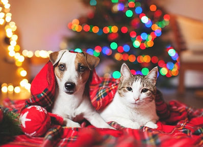cat-and-dog-under-a-christmas-tree-pictu