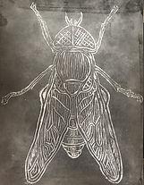 linoleo mosca grabado .jpg