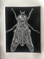mosca fabriano.jpg