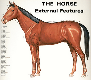 horse features.png
