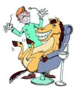 horse in dentist chair.jpg
