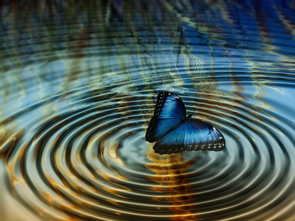 A ripple begins, as a blue butterfly lights on the water