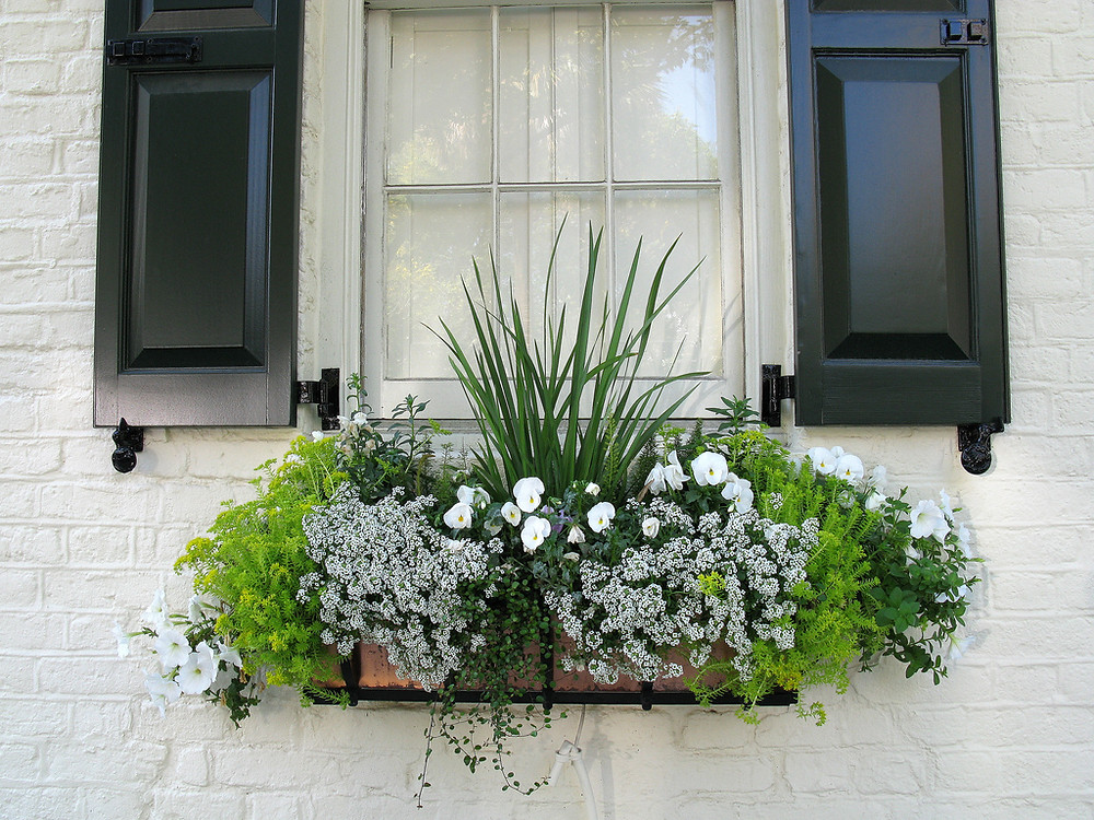 """White with Green Color Scheme 