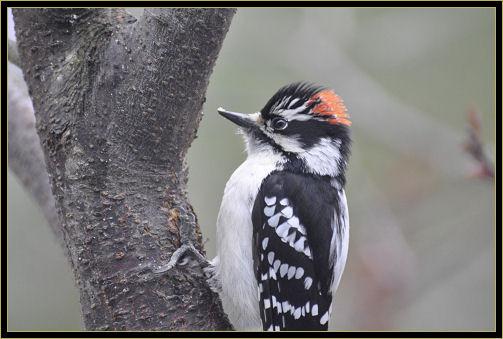 birds 4-25-2017 050 k.jpg