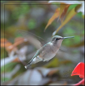 birds nice 15 (1).jpg