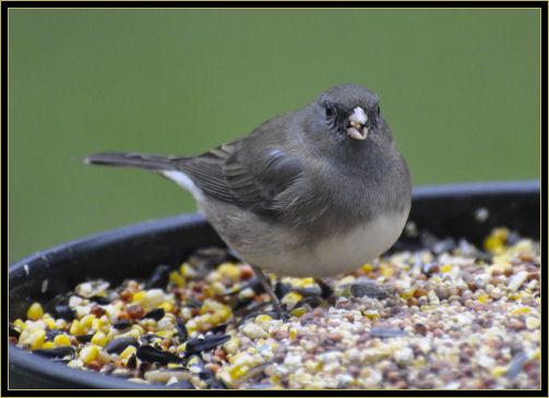 birds 4-25-2017 047 f.jpg