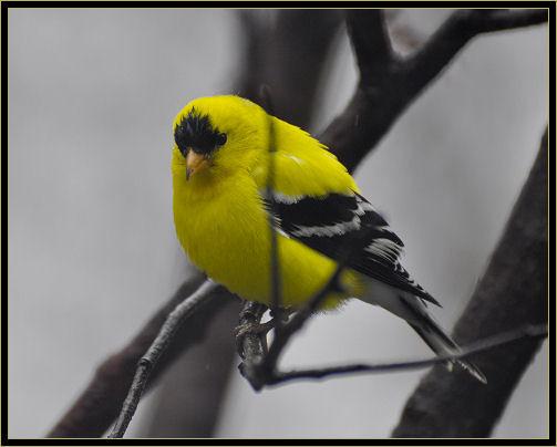 birds 4-25-2017 011 h.jpg