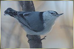 bird5.jpg