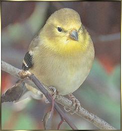 birds 2013 322b.jpg