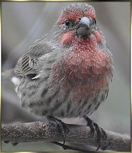 birds 2013 125as.jpg