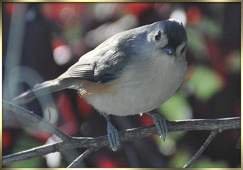 birds 2013 133b.jpg