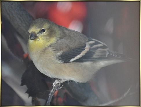 birds 2013 034b.jpg