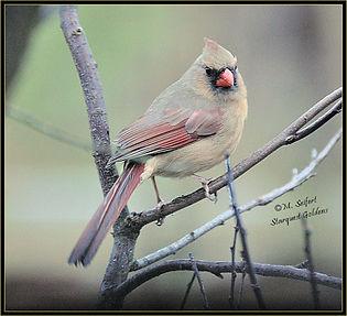 birds piper 002p.jpg