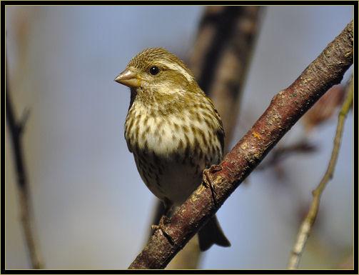 birds 4-25-2017 169 f.jpg