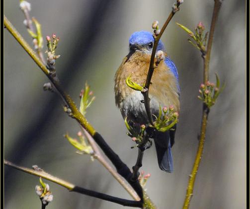 birds 4-25-2017 044 j.jpg