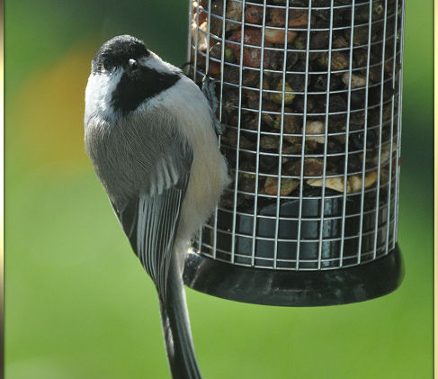 birds 2013 181b.jpg
