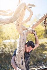 bois Arango arbre.jpeg