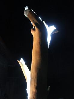 Renaissance, Illuminated tree at night