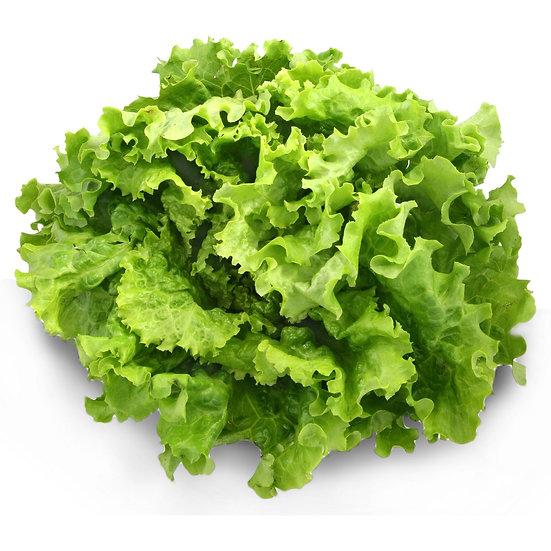Plateau salades 100 mottes