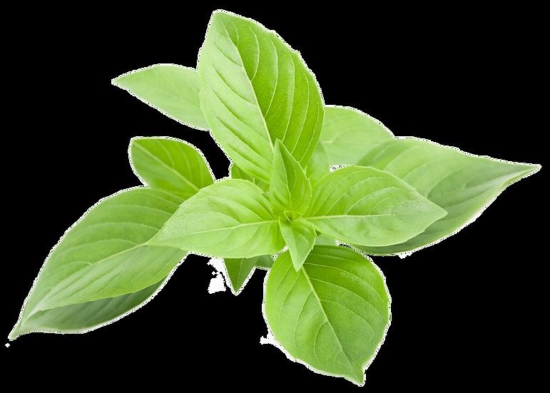 Basilic petites feuilles