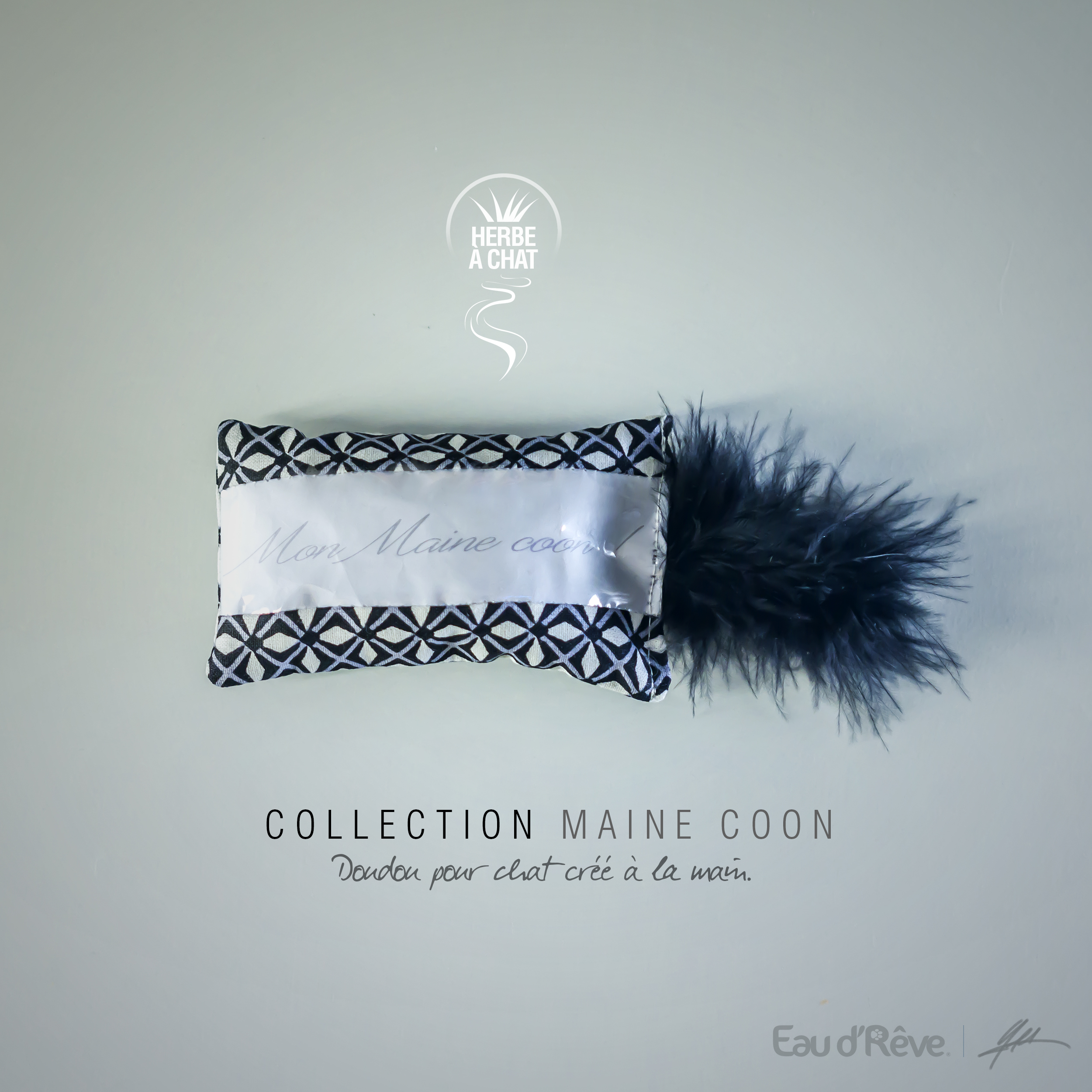 MAINE COON 02