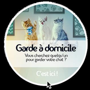 Garde et visite de chat à domicile Toulouse et environs