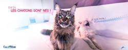 LES CHATONS SONT NES 05.04.15