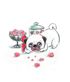 Character study from 'Princess, the pampered pug', personal project