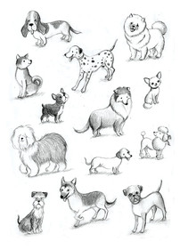 Dogs study, personal project