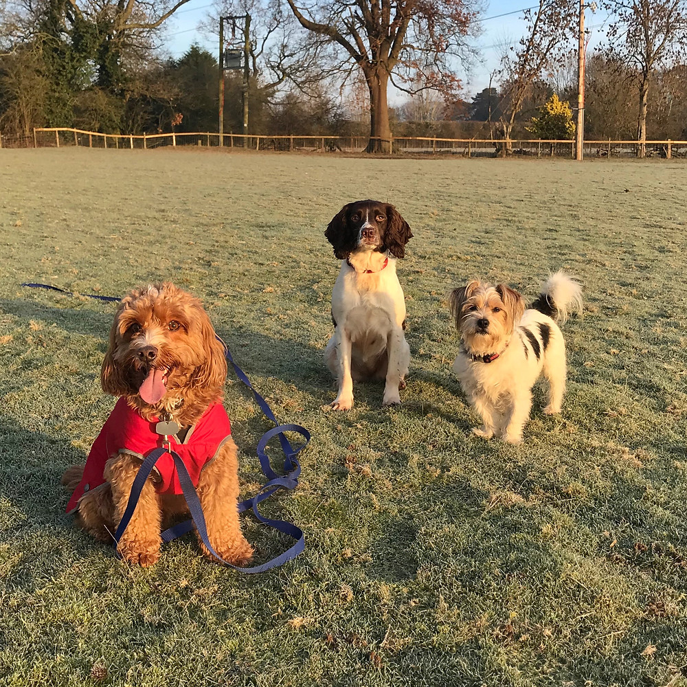 Dog walking Crew